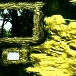 theweepingtree